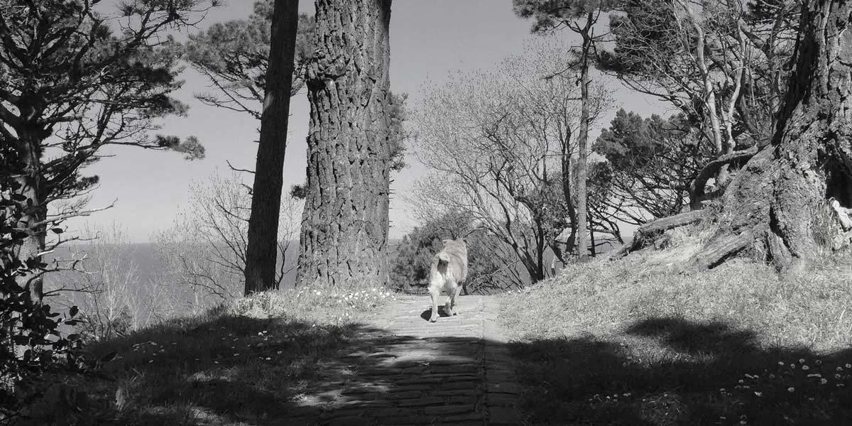 Donostia Urgull woods